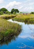 picture of marsh grass  - A wetland marsh with grasses and trees - JPG