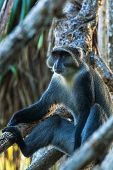 image of monkeys  - Monkey on the tree, holiday monkey, travel to Africa, smart look monkey