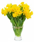 picture of daffodils  - bunch of fresh spring yellow daffodils and tulips in glass vase isolated on white background - JPG