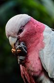 image of tropical birds  - Parrot Tropical Bird with a Colroed Father  - JPG