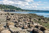 foto of shoreline  - The shoreline of West Seattle Washington at low tide on a sunny day - JPG