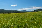stock photo of cloud forest  - Beautiful mountain landscape with wild flowers in the meadow on a background of mountains forest and blue sky with clouds - JPG