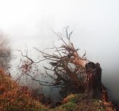foto of loneliness  - Fallen tree lying in water in heavy fog. Human activities that harm environment. Loneliness melancholy ** Note: Soft Focus at 100%, best at smaller sizes - JPG