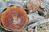 image of cross-section  - Cross section brown of tree trunk texture - JPG