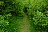 foto of vegetation  - Forest footpath through young spring forest and vegetation - JPG