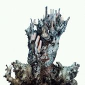 foto of surreal  - Surreal image of a face of a girl hidden by a trunk and the bark of a tree on a white background - JPG