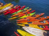 picture of kayak  - Kayaks forming a graceful arch in the waters of Rockport - JPG