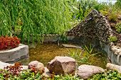 picture of sand lilies  - beautiful pond - JPG