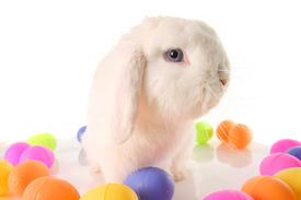 picture of bunny rabbit  - Easter bunny rabbit surrounded by Easter eggs - JPG