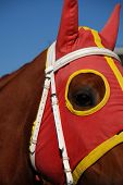 stock photo of blinders  - Close - JPG
