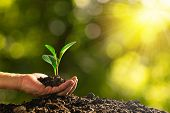 Closeup Hand Of Person Holding Abundance Soil With Young Plant In Hand   For Agriculture Or Planting poster