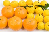 image of satsuma  - Many citrus fruit of Satsuma and Yuzu - JPG