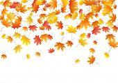 Orange Maple Leaves Background Seasonal Vector Illustration. Fall Season Specific Vector Background. poster