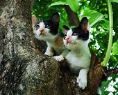Cute Twin Kitten Cat Catch On Tree, Baby Calico Cat With Curious Eye, Domestic Pet, Happy Kitten Cat poster