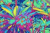 Neon Frangipani Flower In Leaf. Plumeria Blossom Psychedelic Digital Illustration. Blooming Tropical poster