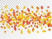 Oak And Maple Leaf Beautiful Background Seasonal Vector Illustration. Autumn Leaves Flying Graphic D poster