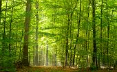 Deciduous forest in summer