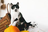 Cute Kitty Standing On Pumpkin With Funny Look At Cozy Wicker Basket And Zucchini In Light On Wooden poster