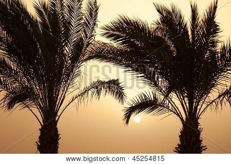 Постер, плакат: Закат пальмы на побережье моря, холст на подрамнике
