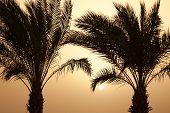 Постер, плакат: Закат пальмы на побережье моря