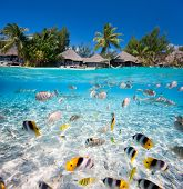 foto of french polynesia  - Beautiful tropical island in French Polynesia under and above water - JPG