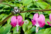 pic of claddagh  - A Claddagh ring and Bleeding Hearts in the Garden