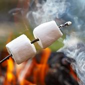 picture of sticks  - marshmallow on a stick roasted over a camping fire - JPG