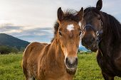 foto of colt  - Colt and its mother posing in front of a sunset - JPG