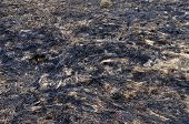 Burnt Dry Grass On The Ground