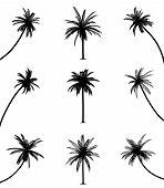 Постер, плакат: Пальмовые деревья