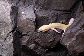 picture of terrarium  - Lizard resting on the stone at a terrarium - JPG