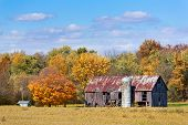 stock photo of silos  - An old barn with silo stands between a soybean field and a colorful autumn wood in Midwestern America - JPG