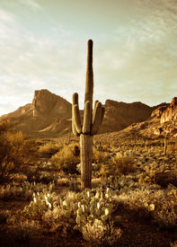 image of wild west  - Wild west desert trail to Superstition Mountain with Saguaro cactus tree - JPG
