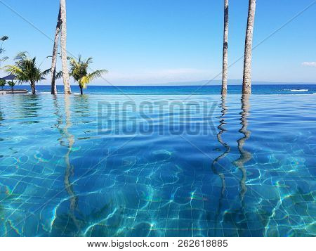 Palm Trees Reflected In An