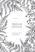 Monochrome Flyer Template Decorated With Forest Ferns And Herbs Hand Drawn With Black Contour Lines  poster