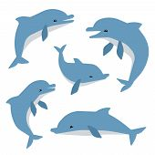 Cute Dolphins In Different Poses Vector Illustation. Dolphins Isolated On White Background. Animal M poster