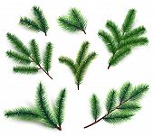Fir Branches. Christmas Tree Branching Isolated. 3d Realistic Conifer Branch Set For Winter Holiday  poster