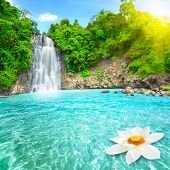 Beautiful lotus flower in waterfall pool. Vietnam