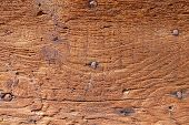 Background macro of an old solid wood front door with rusty iron nails. The surface of the tree is r poster