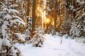 picture of arctic landscape  - beautiful winter landscape with sunset in the forest - JPG