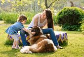 picture of puppies mother dog  - mother and child playing with dog on nature - JPG