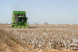 stock photo of pima  - a cotton picker harvests cotton with a cotton gin in the background - JPG