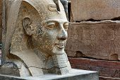 stock photo of ramses  - The sculpture of Ramses II in Luxor temple Egypt - JPG