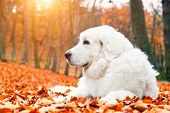 foto of dog eye  - Cute white puppy dog lying in leaves in autumn - JPG