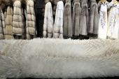 image of arctic fox  - White fur and the coats at a store - JPG