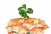 pic of prosperity  - Actual topic of money tree - JPG