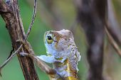 picture of lizard skin  - Green Lizard changing skin resting on wood horizontal - JPG