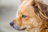 foto of personality  - Dogs are more than just pets they are familly - JPG