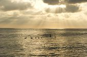 foto of flock seagulls  - Sun rays break through the clouds as a flock of seaguls rest on the water - JPG