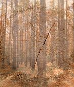 picture of cutting trees  - Double exposure trees in the wood against the cut - JPG
